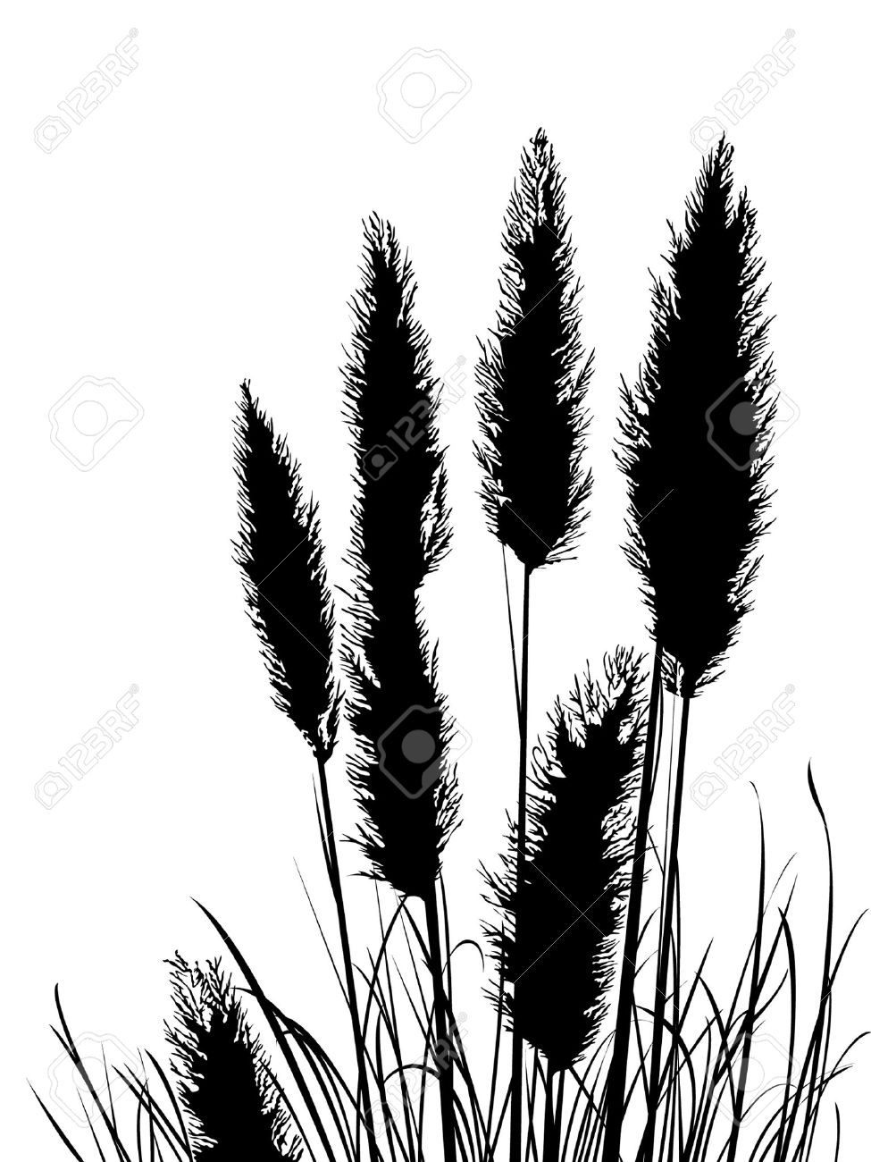 180 Pampas Grass Stock Illustrations, Cliparts And Royalty Free.