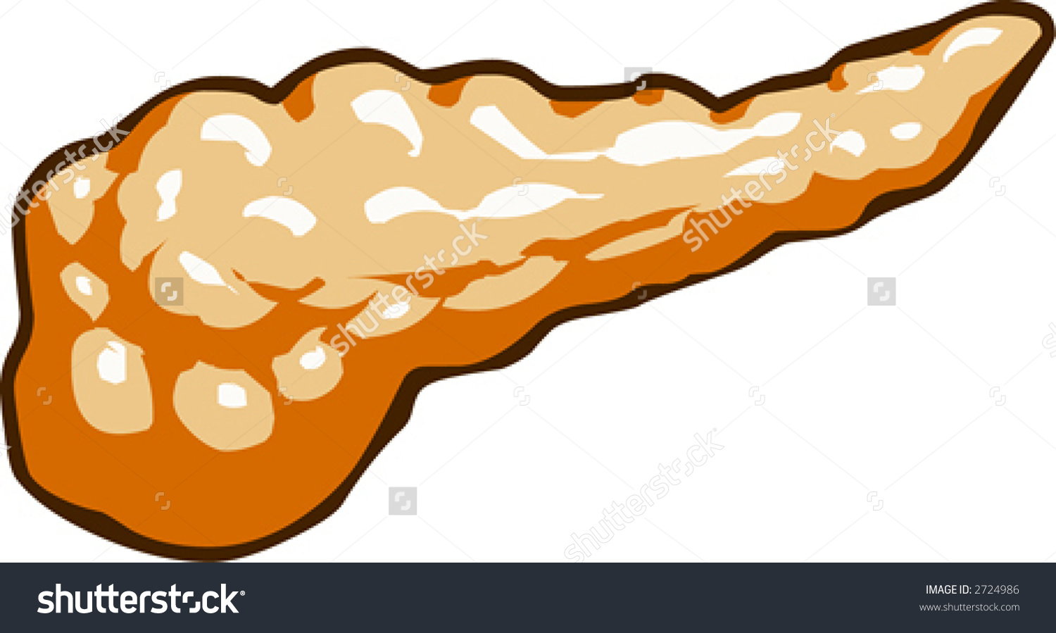Pancreas Stock Vector 2724986.