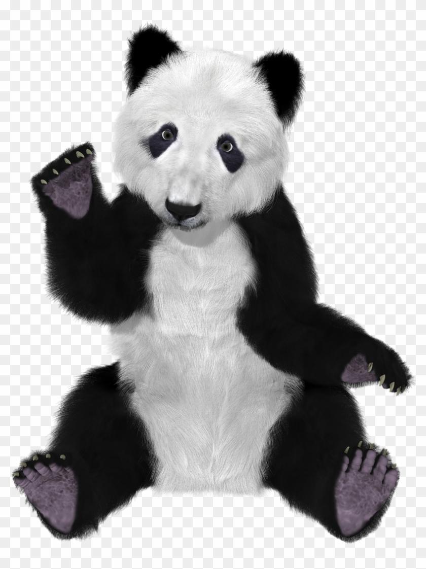 Panda China Bear Furry Big Bear Png Image.