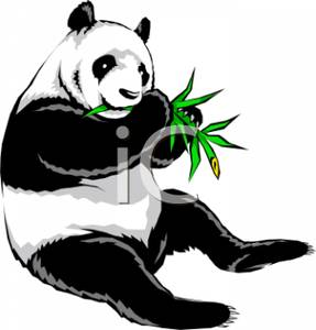 A Panda Eating Bamboo Clipart.