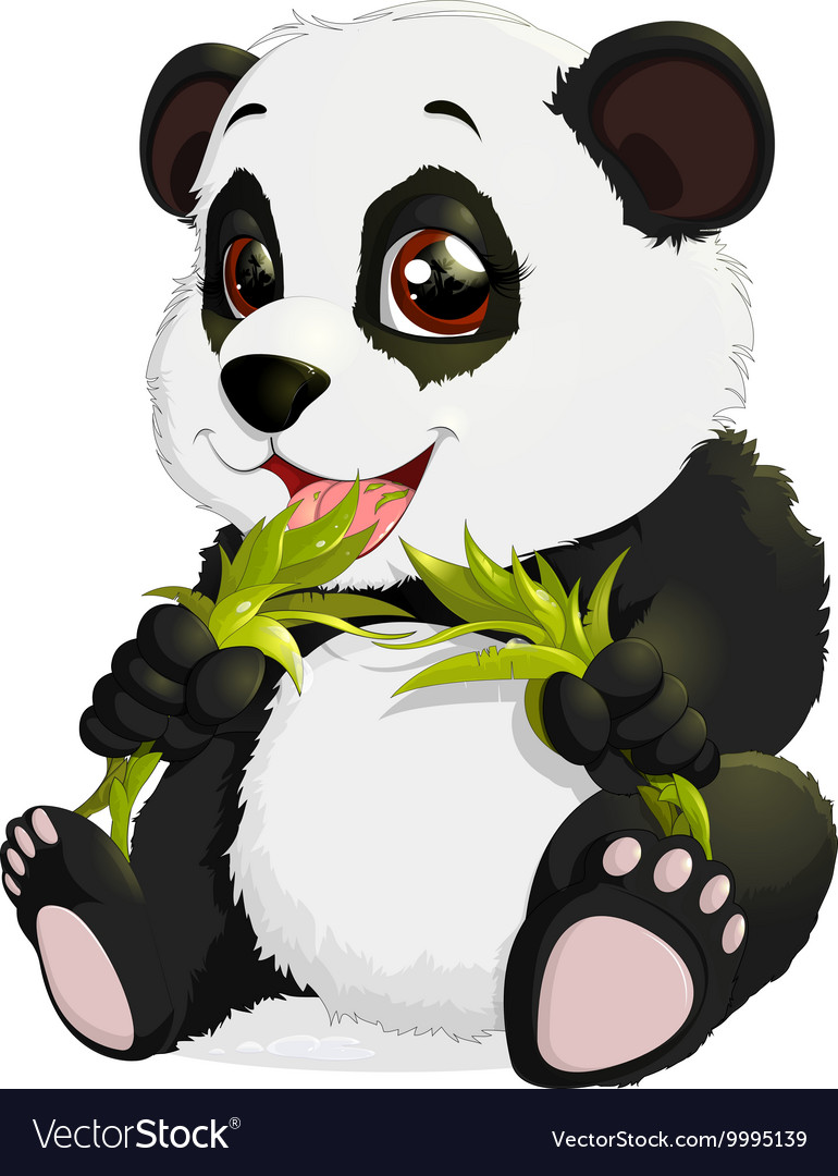 Very cute Panda eating bamboo.