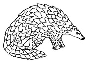 Pangolin coloring pages.