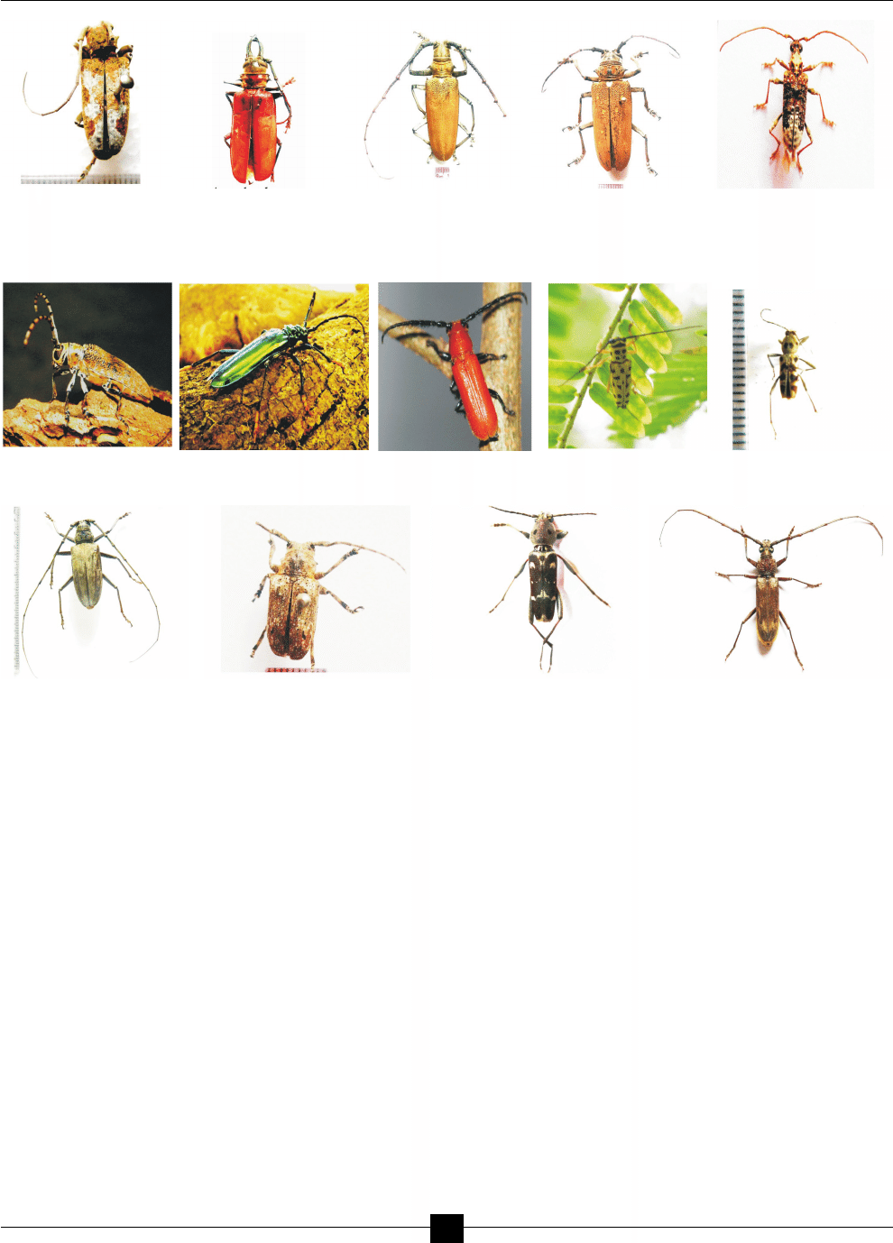 LONGICORN BEETLES AND THEIR DIET BREADTH FROM FORESTS OF KOLHAPUR.
