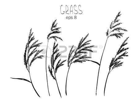 85 Panicle Stock Vector Illustration And Royalty Free Panicle Clipart.