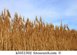 Panicle Illustrations and Clipart. 10 panicle royalty free.