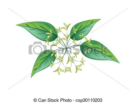 Scented jasmine clipart #2