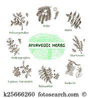 Paniculata Clip Art Illustrations. 23 paniculata clipart EPS.