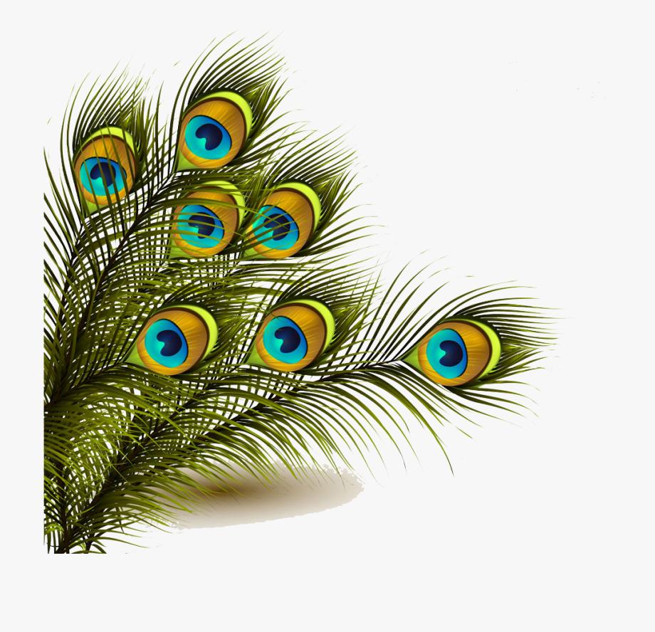 Peafowl Feather Clip Art.