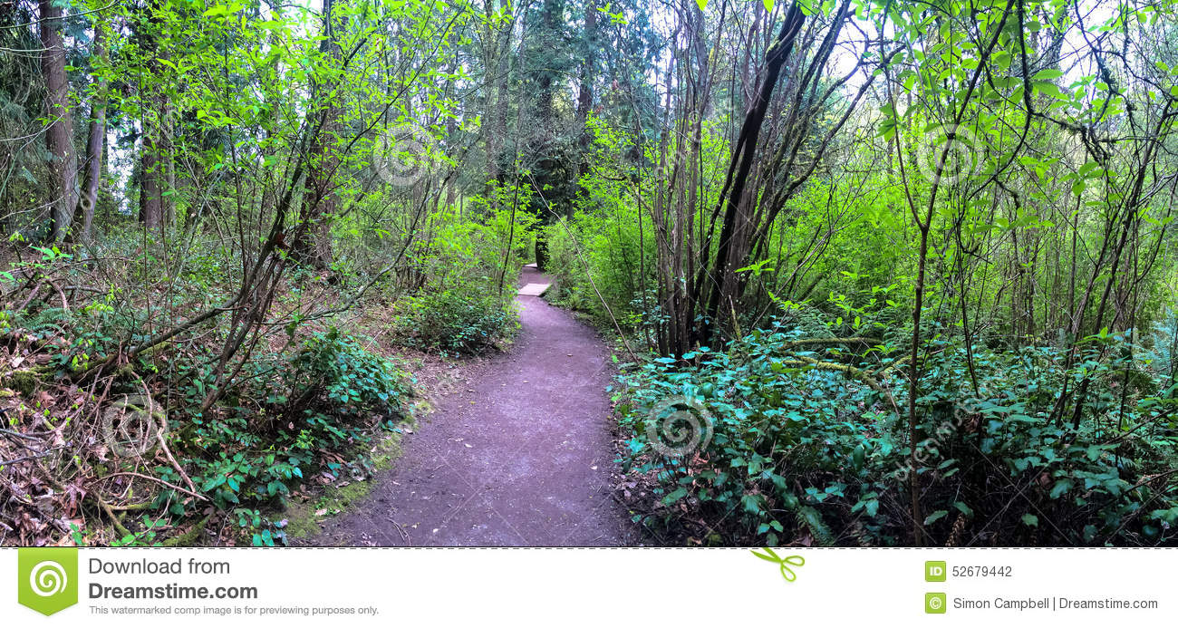 Panoramic Forest Nature Trail Stock Photo.