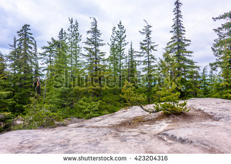 Forest Panorama Stock Photos, Royalty.