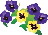 Pansy Border Clipart.