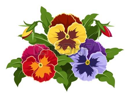 2,048 Pansy Stock Illustrations, Cliparts And Royalty Free Pansy.