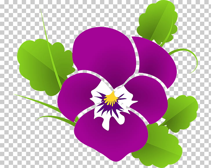 Pansy , pansies PNG clipart.