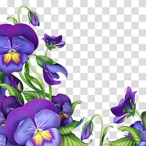 Flower Blue Violet Morning glory Light, morning glory.