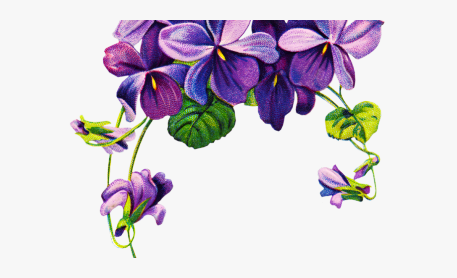 Pansy Clipart Violet Rose.