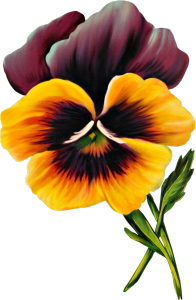 Pansy clipart free.