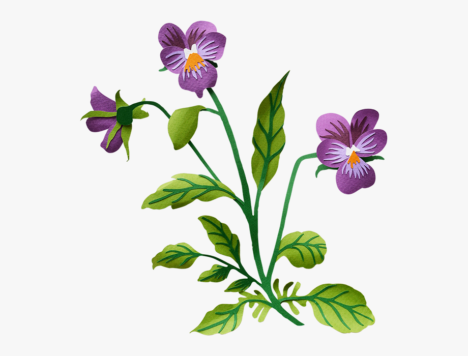 Pansy Transparent Background Clipart , Png Download.