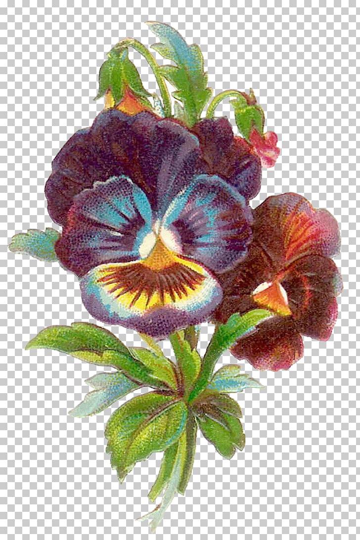 Pansy Antique Flower , flower vintage PNG clipart.