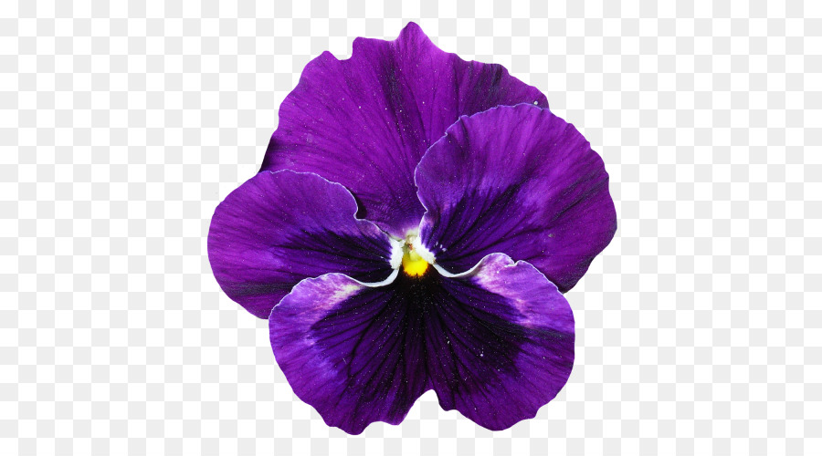 Purple Flower png download.