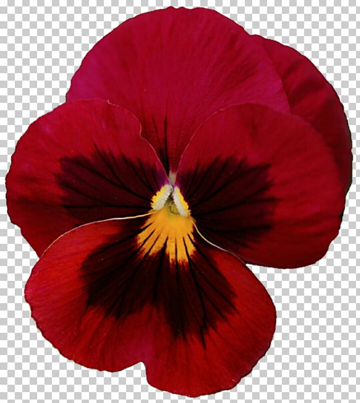 Pansy Flower Violet PNG, Clipart, Annual Plant, Clip Art.