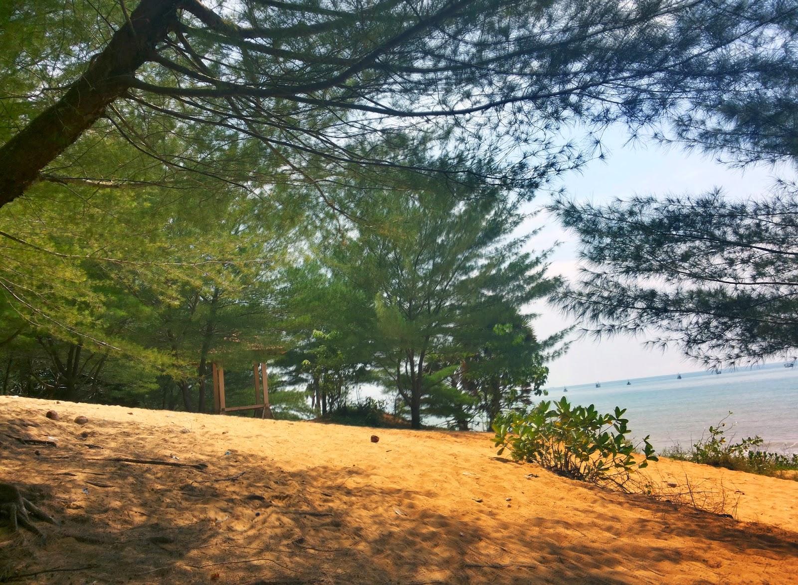Uniknya Gundukan Pasir Berhias Cemara Udang di Pantai Slopeng.