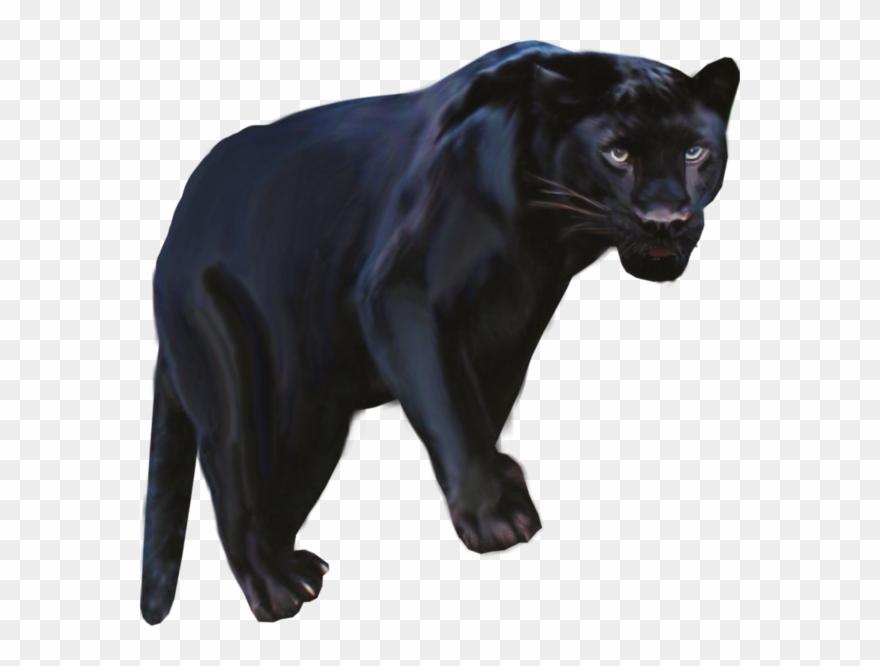 Pantera Animal Png Clipart Black Panther Leopard Jaguar.