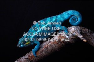 Acclaim Images.