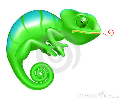 Rainbow Chameleon Stock Photos.