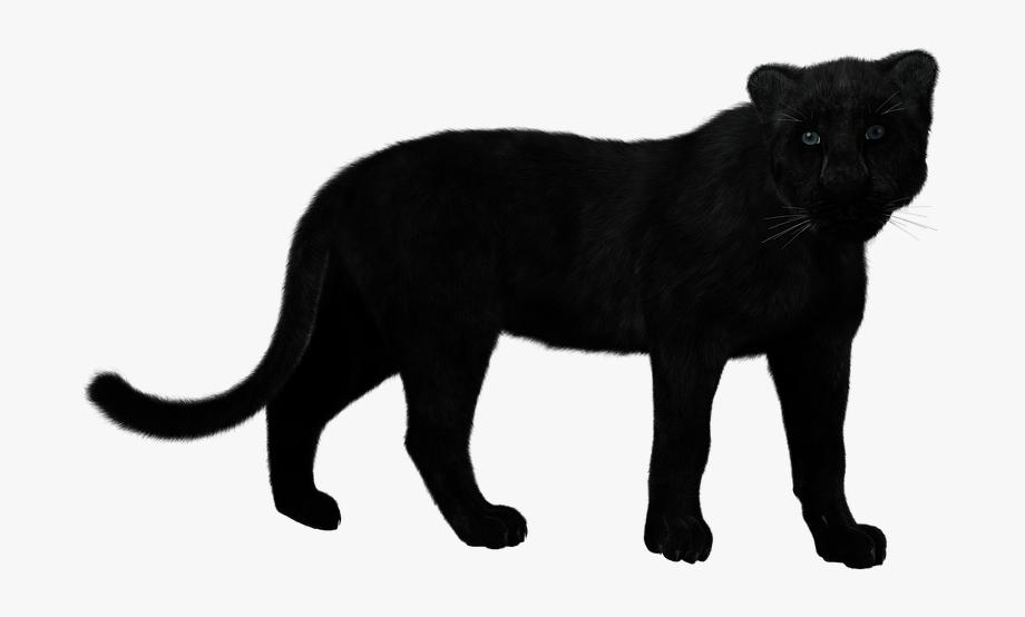 Panther, Black Big Cat, Mystical, Predator, Muscular.