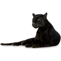 Download Panther Free PNG photo images and clipart.