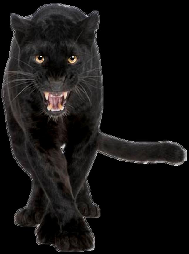 Panther PNG Images Transparent Free Download.