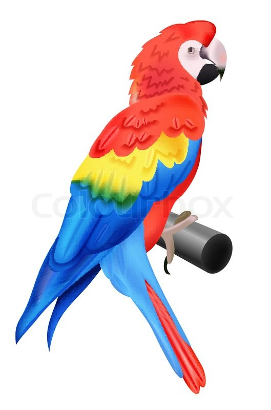 Colorful parrot macaw isolated on white background.