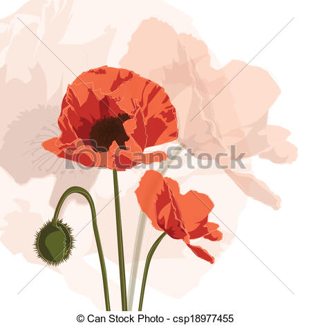 Clipart Vector of Papaver graphic.