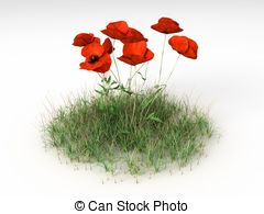 Papaver Stock Illustrations. 255 Papaver clip art images and.