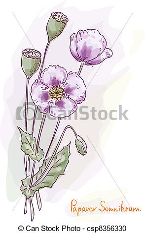 Papaver Stock Illustrations. 146 Papaver clip art images and.