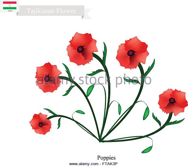 Papaveraceae Stock Vector Images.