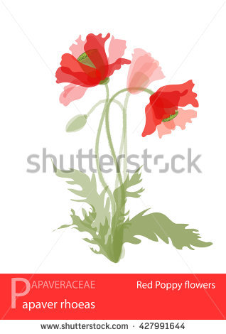 Papaveraceae Stock Photos, Royalty.