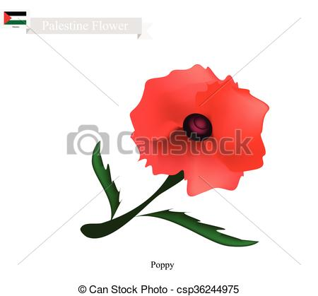 Vectors Illustration of Red Poppies, The Popular Flower of.
