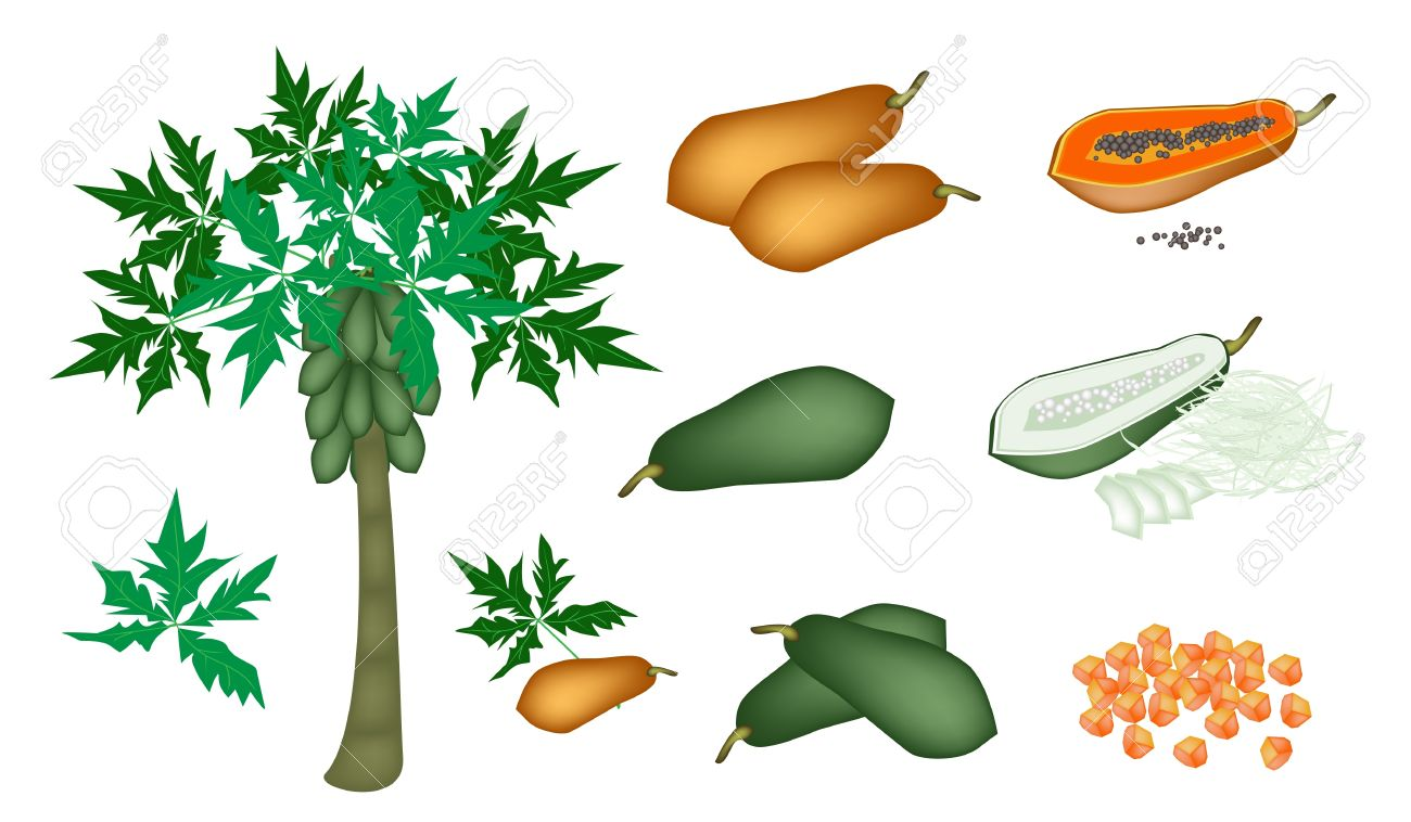 Papaya Tree Clipart.