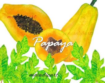 Papaya watercolor.