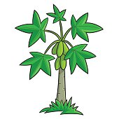 Papaya Tree Clip Art, Vector Papaya Tree.