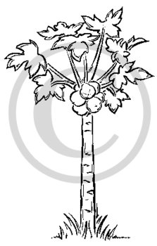 Hawaiian Papaya Tree B&W Cartoon Clip Art.