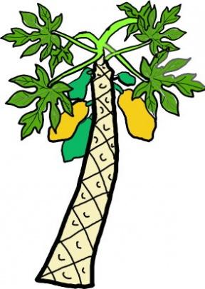 Papaya Clip Art.