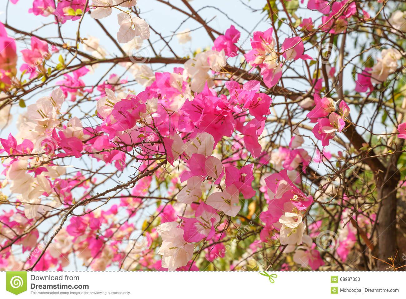 Bunga Kertas Stock Photos, Images, & Pictures.