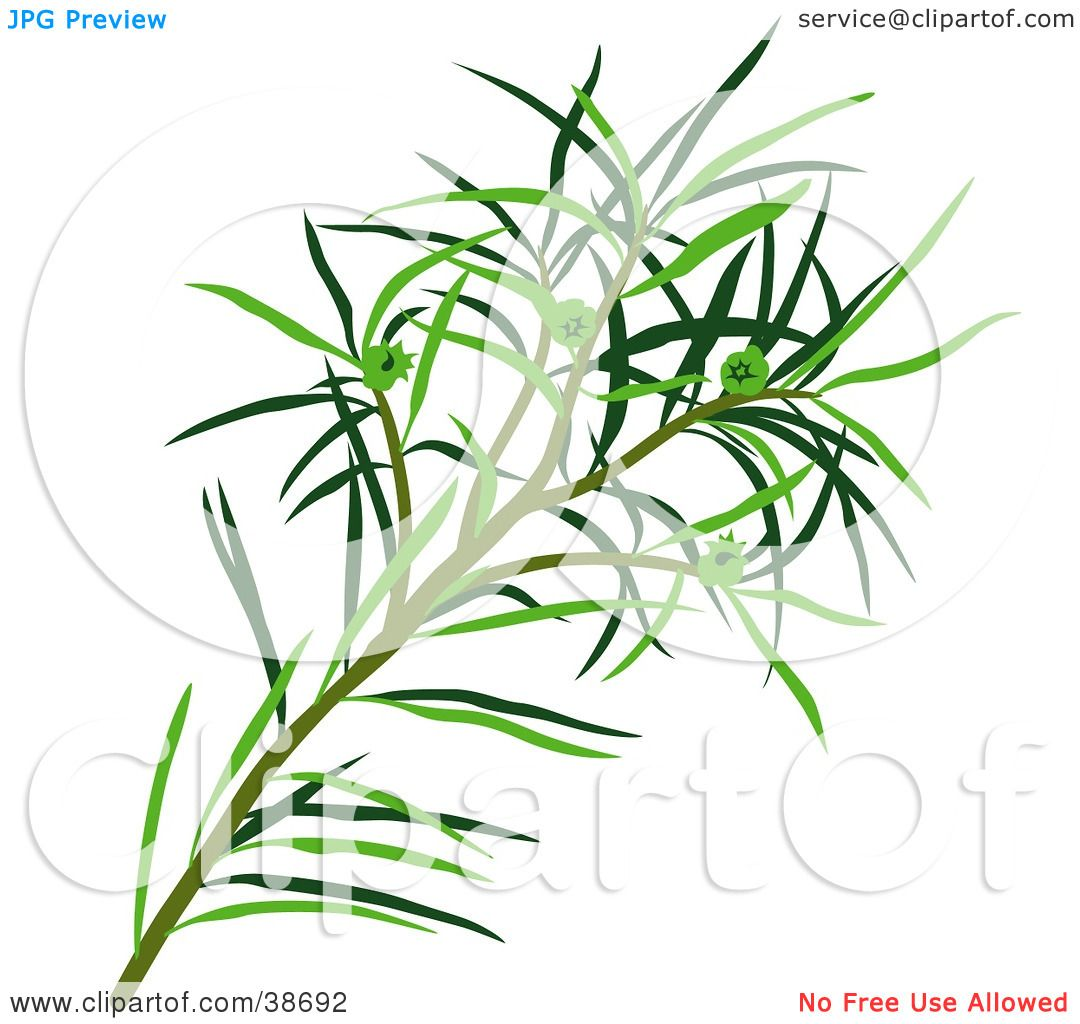 Clipart Illustration of Green Narrow.