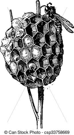 Clip Art Vektor von Stich, Weinlese, nest, Bienenstock, Papier.