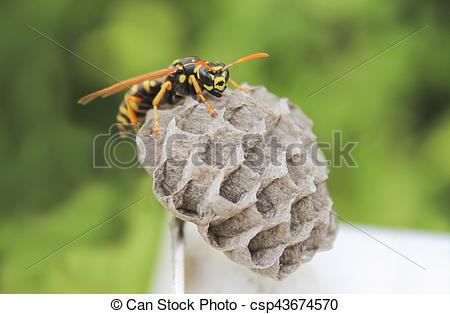 Bilder von wespe, nest.