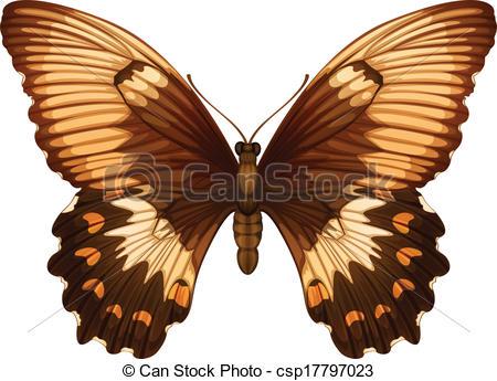 Vector Illustration of Papilio aegeus.