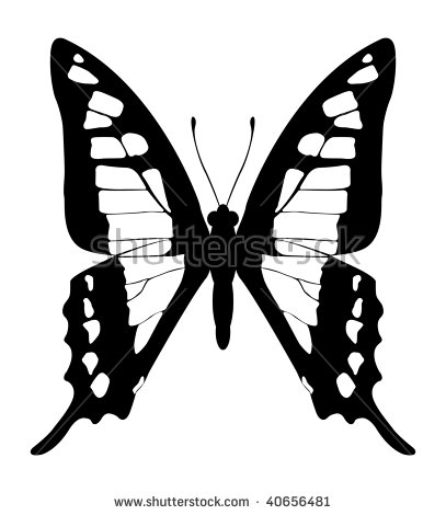 Butterfly Blackandwhite Variation Papilio Aegeus Stock Vector.