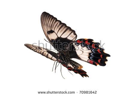 Butterfly Flight Stock Photos, Royalty.